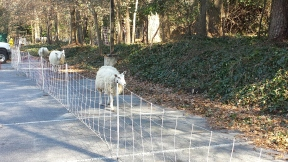 We can overcome many fencing challenges, even pavement!